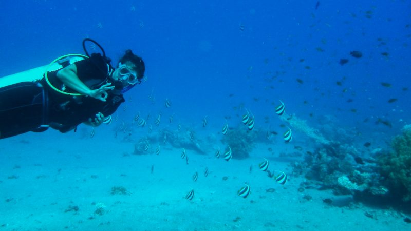 dahab-diving-learn-to-dive