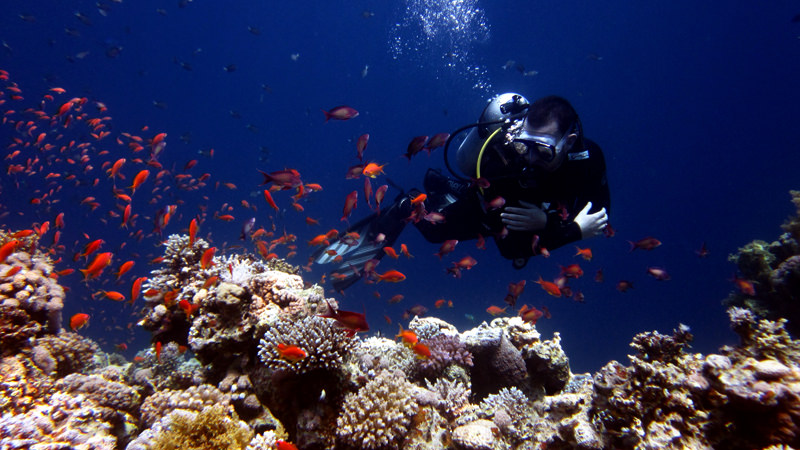dahab-diving-page-Coral_Diver-(2)