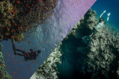 dive-freedive-holiday-dahab