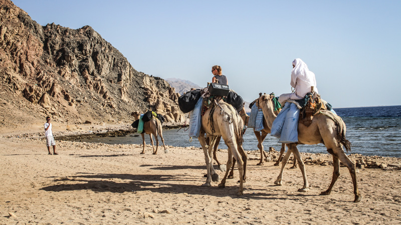 camel-diving-safari-dahab