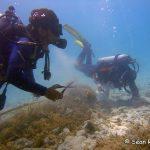 fish-net-removal-ras-abu-galum