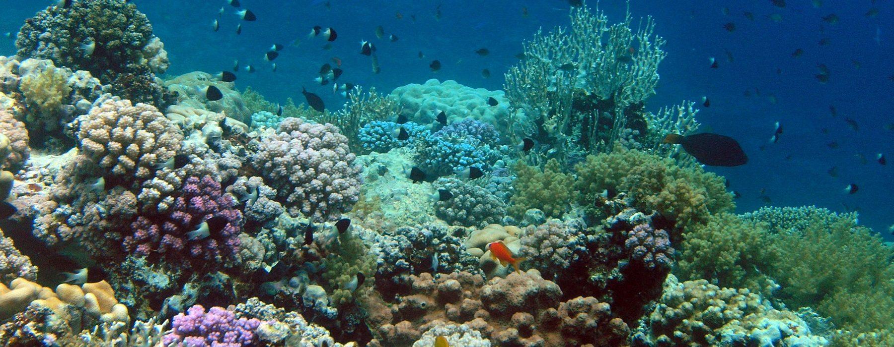 ras-abu-galum-coral-reef-header