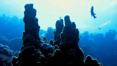 islands-dive-site-dahab