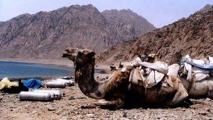 camel-dive-safari