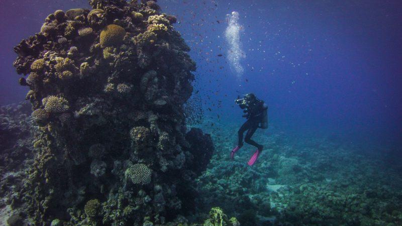 dahab-diving-holiday