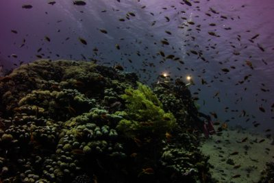 night-diving-dahab