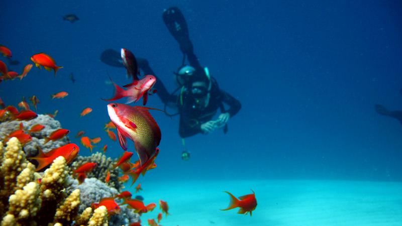 dahab-diving-page-Coral_Diver-(3)