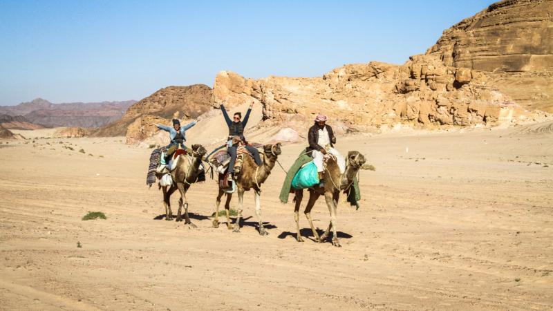 dahab-camel-trek-IMG_7943