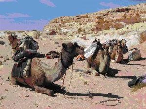 trekking-sinai-desert-2-jay-mackareth