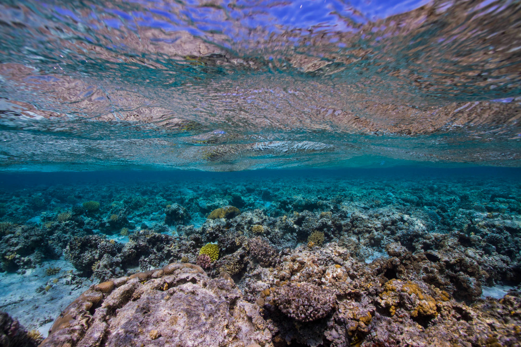 IMG_5895-dahab-diving